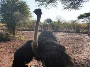 toursdurbansouthafricabesttourssouthafricabesttourguidesanipasssafari11